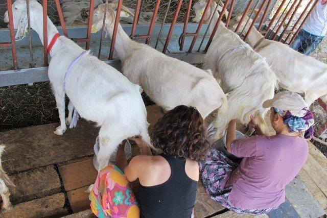 tangala goat farm
