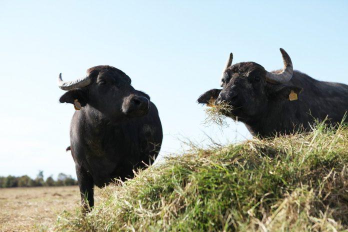Non è una bufala