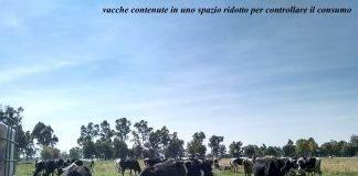 Pascolamento e qualità del latte